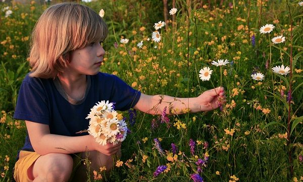 Boy Picking Wildflowers