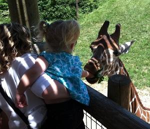 Aracelli McWilliams feeding a giraffe